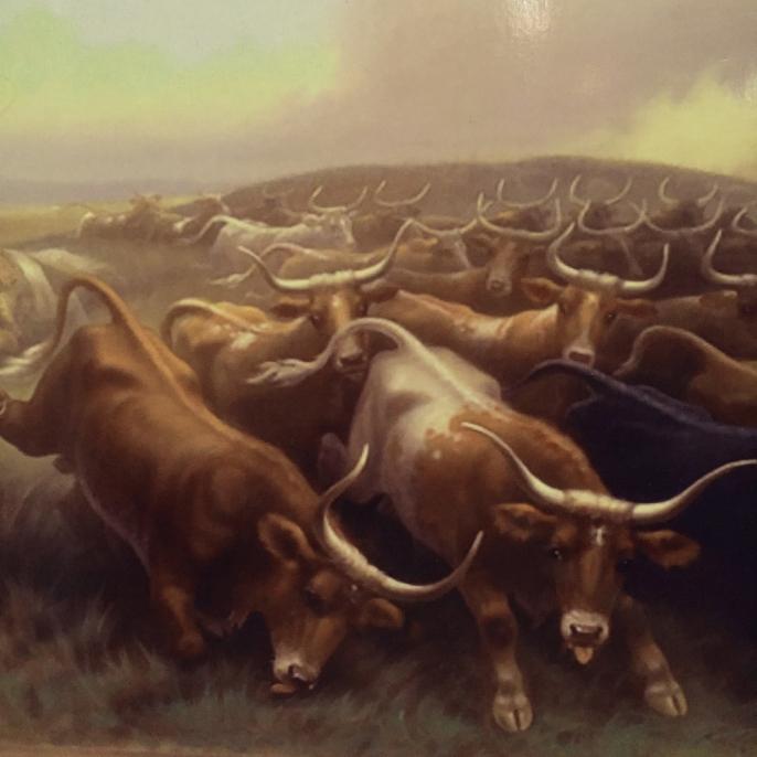 Longhorn cattle CDsz.jpg
